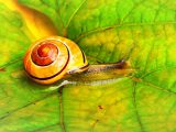 Snail Farm pareri
