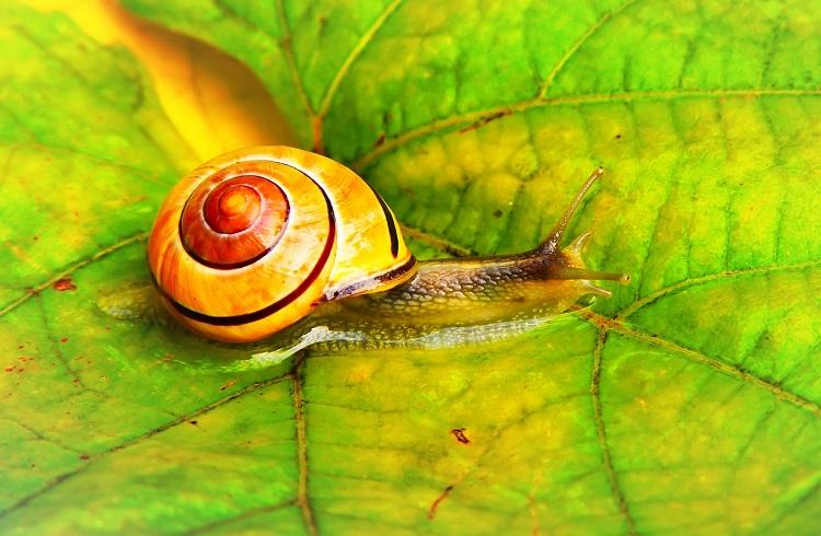 Snail Farm – unde să cumpere, funcționează, pareri, for