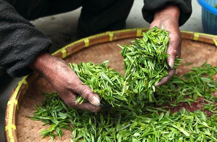 Tibettea Active Joint – pareri, ingrediente, unde să cumpere, for